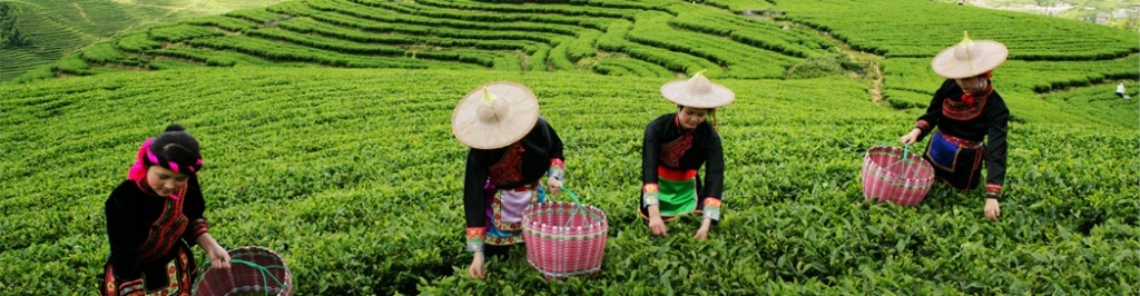China tea tours image